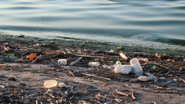 Download Trash On Shore With Dirty Water nulled download