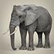 Realistic Asian Elephant