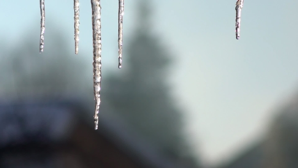 Download Icicle Hanging From the Roof. Dripping Icicles.  nulled download