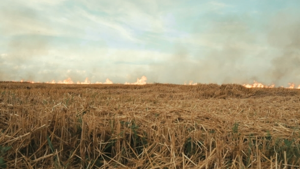 Download Burning Smoky Field nulled download