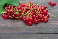 Red currants closeup background on rustic wood