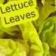 Lettuce Leaves - GraphicRiver Item for Sale