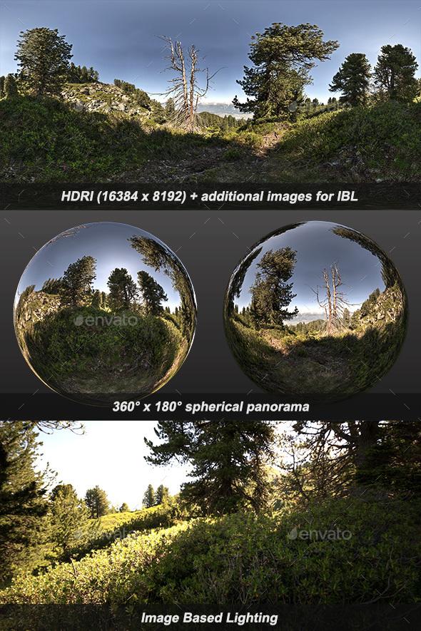 Arolla Pines HDRI - 3DOcean Item for Sale