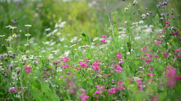 Download Detail Of Wild Meadows In Central Part Of Russia nulled download