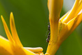Ants on Heliconia Closeup II - PhotoDune Item for Sale