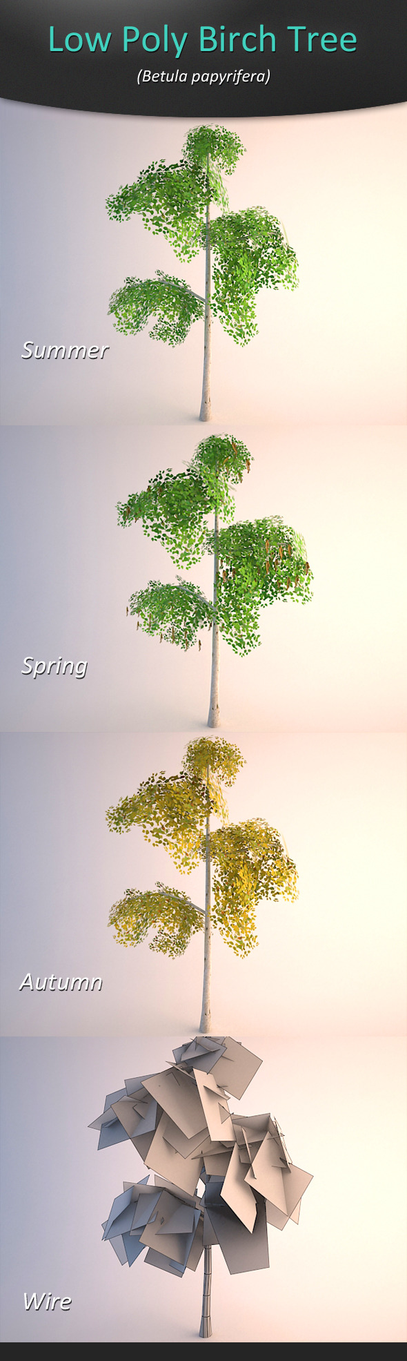 Low Poly Birch Tree - 3DOcean Item for Sale