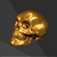 Human Skull High Poly