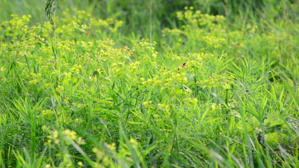 Download Grass Meadow With Wild Bees, Russia nulled download