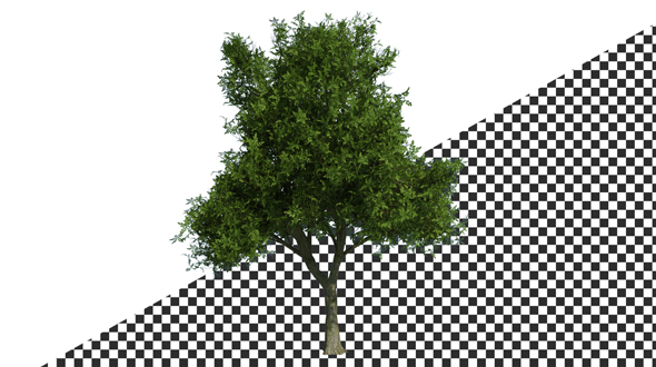 Download Tree nulled download