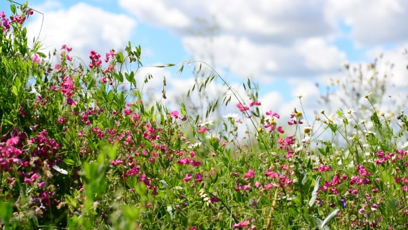 Download Beautiful Meadow With Wild Flowers On Sky Background nulled download