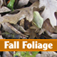 Fall Foliage - GraphicRiver Item for Sale