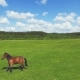 Flight Above The Green Meadow With Grazing Horse.  30Fps