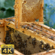 Bees - 2