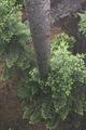 Baumwipfelpfad / tree top path ecosystem