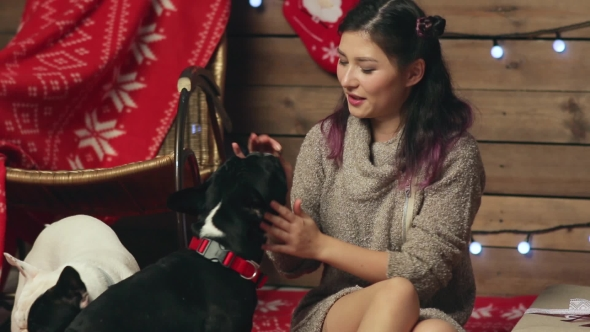 Download Pretty Girl Feeding French Bulldogs At Christmas nulled download