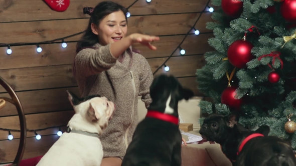 Download Girl Feeding And Petting French Bulldog At Xmas nulled download