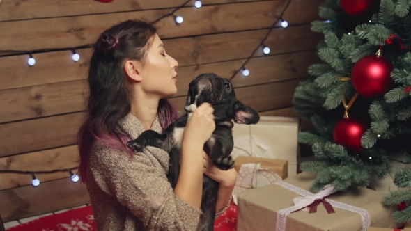 Download Pretty Girl And French Bulldog At Christmas Tree nulled download