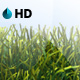 HD GRASS BACKGROUND LOOP - VideoHive Item for Sale