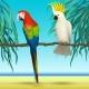 Parrots, Cockatoo
