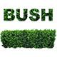Bush Step
