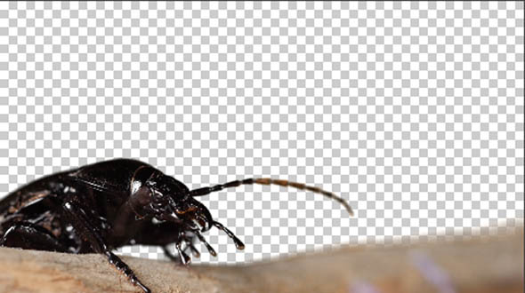 Download beetle chromakey nulled download