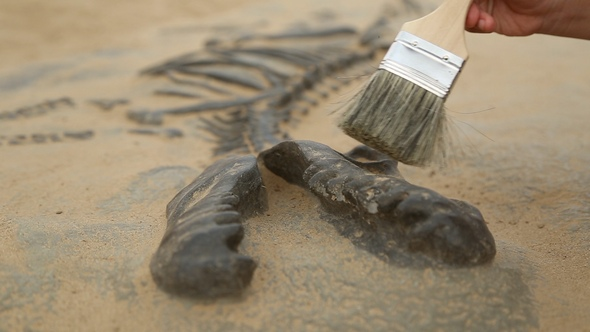 Download Archaeological Excavation of Dinosaur Bones nulled download