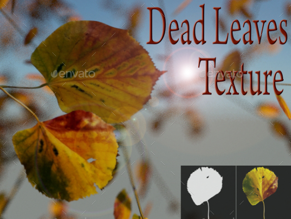 3DOcean Dead Leaves 18248425