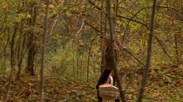 Download Beautiful Slender Girl Walking In Autumn Forest Holding a Picnic Basket. Profile View  Steadicam nulled download