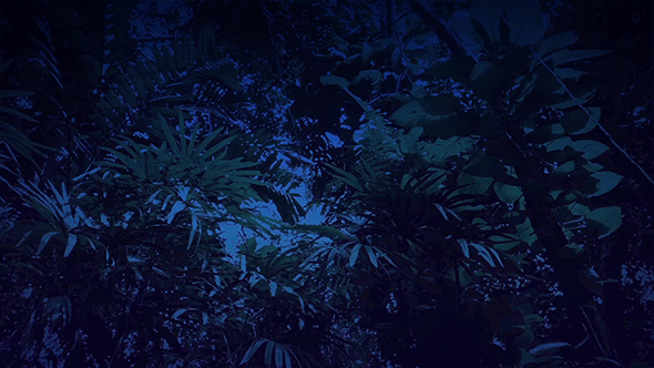 Download Gliding Under Rainforest Plants and Trees at Night nulled download