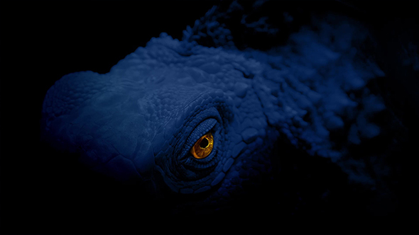 Download Glowing Reptile Eye In The Dark nulled download