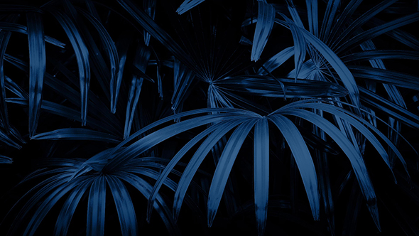 Download Jungle Ferns In Breeze At Night nulled download