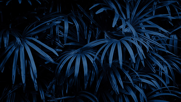 Download Jungle Plants Swaying at Night nulled download