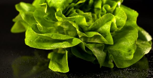 VideoHive Lettuce 5-Pack 1798824