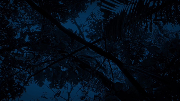 Download Gliding Under Jungle Plants At Night nulled download