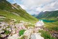 flowers on rocks by alpine lake