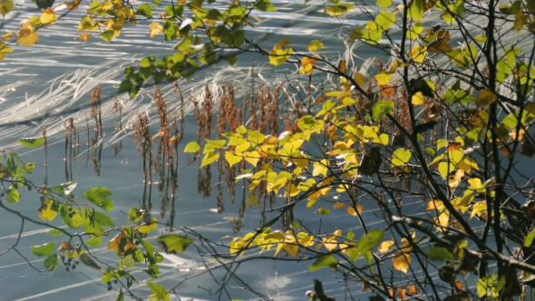 Download Beautiful Golden Leaves In Autumn With Reflection on the water nulled download