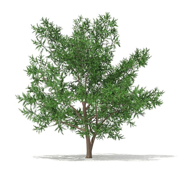 Scots Pine Tree (Pinus sylvestris) 8.7m - 3DOcean Item for Sale