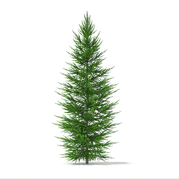 Norway Spruce (Picea abies) 2.7m - 3DOcean Item for Sale