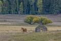 Horse in pasture near barn.