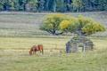 Horse grazes in pasture.