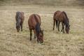 Three horses in pasture.