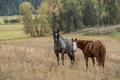 Horses in pasture.