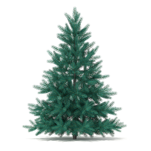 Blue Spruce (Picea pungens) 1.4m - 3DOcean Item for Sale