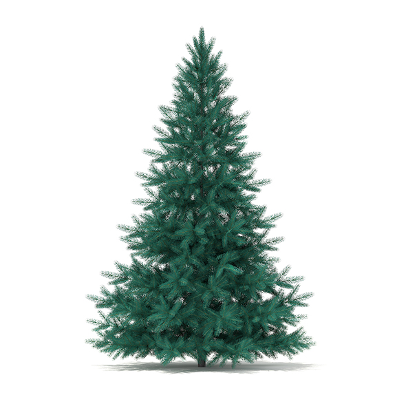 Blue Spruce (Picea pungens) 2.2m - 3DOcean Item for Sale