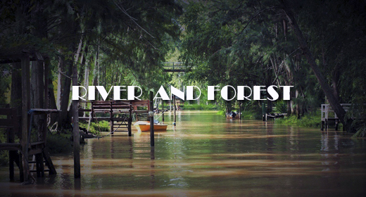RIVER AND FOREST FOOTAGE
