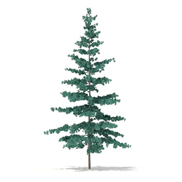 Blue Atlas Cedar (Cedrus atlantica) 2.7m - 3DOcean Item for Sale