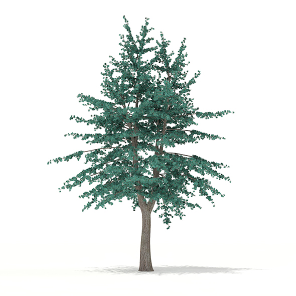 Blue Atlas Cedar (Cedrus atlantica) 2.9m - 3DOcean Item for Sale