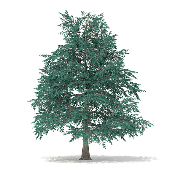 Blue Atlas Cedar (Cedrus atlantica) 9.6m - 3DOcean Item for Sale