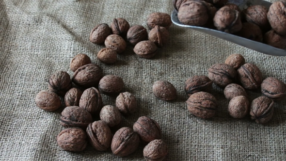 Download Lot Of Ripe Walnuts With Peel And Shoulder Blade nulled download