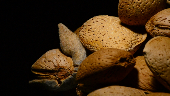 Download Almonds Nuts Gyrating on Black Background nulled download